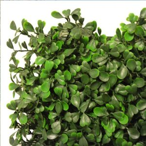Artificial Boxwood Hedging Panel 50cm X 50cm