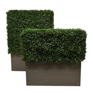 Box Hedge Planters